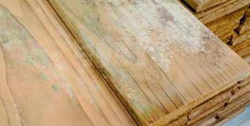 beschimmelt hout